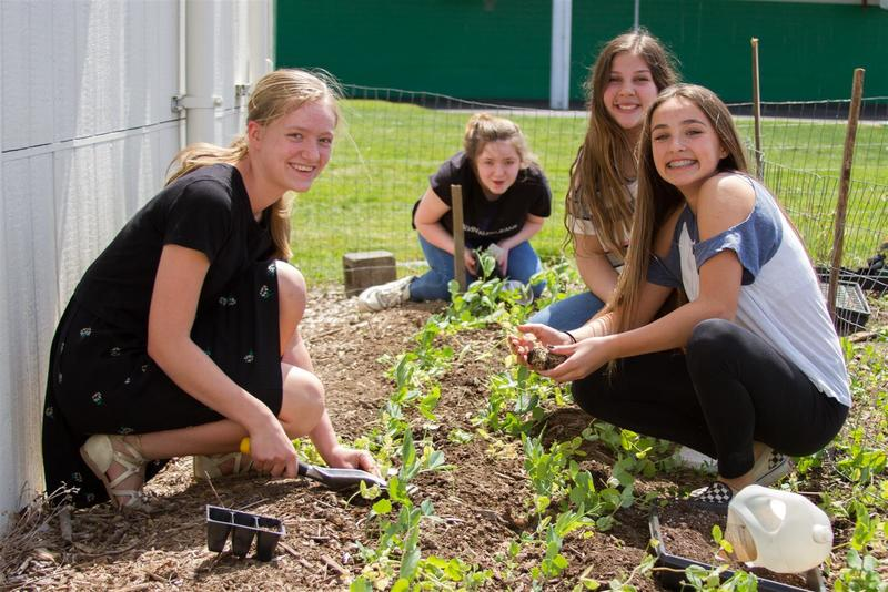 Students learn how to prepare soil and care for plants throughout the growing season.